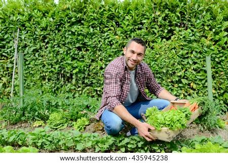 handsome young gardener growing organic bio vegetables  #435945238