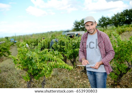 handsome young male oenologist with a computer digital tablet in vineyard checking grapes ripeness before harvest