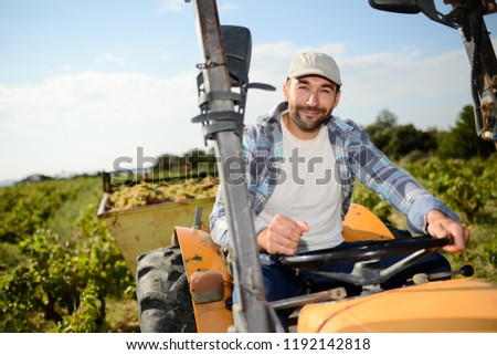 handsome young man farmer driving tractor in vine during wine harvest season