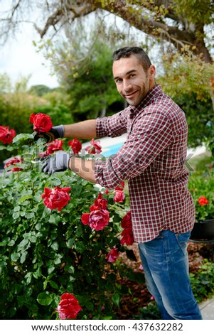handsome young man gardener landscaping and taking care of beautiful roses #437632282