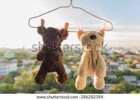 Hanging  and dry out together Dog and Bear dolls friend after wash with sunlight
