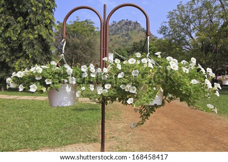 Hanging baskets with white petunia flowers hanging in a garden