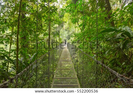 Hanging bridge at natural rainforest park in Costa Rica #552200536