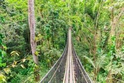 Hanging bridge in the air. Canopy tour, Mamelles Parc, Bouillante, Basse-Terre, Guadeloupe