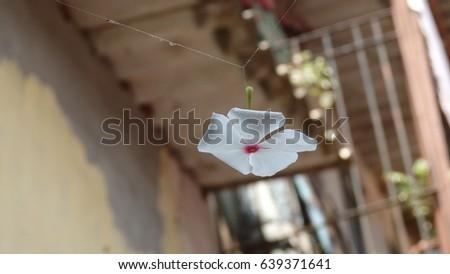 Hanging flower #639371641