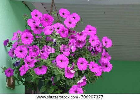 Hanging Flowers #706907377