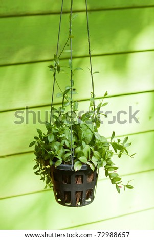 Hanging green plant with pink blossom decoration