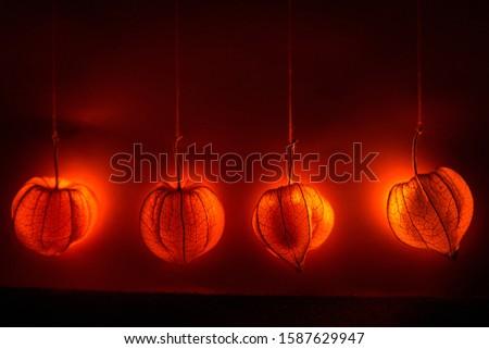 Hanging physalis - bright shine Stock foto ©