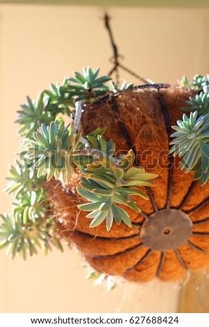 hanging succulent basket #627688424