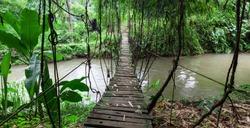 Hanging wooden bridge in lush greens in the Jungle. Bali island. Indonesia.