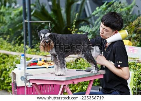 Hangzhou - September 21: hangzhou sports park, a man give black schnauzer dog grooming, on September 21, 2014 in hangzhou.