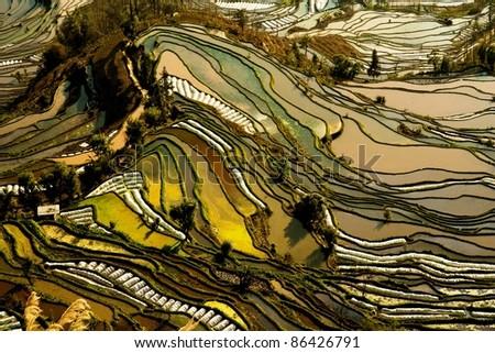 Hani rice terraces of yuanyang, yunnan, china
