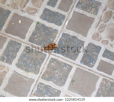 Hanoi Vietnam September 2018: Large dead roach on a tiled floor in Vietnam.