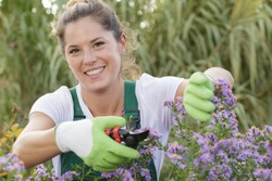 happu attractive woman in plaid shirt is pruning flowers