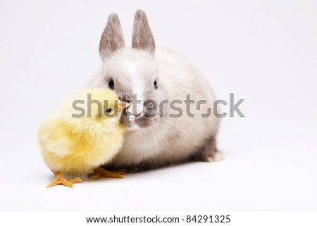 Happy animal, Bunny and chick