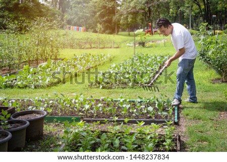 Happy asian man working with rake tool in organic garden,middle aged people grow vegetables in summer,gardening in outdoor,male gardeners cares vegetables,agriculture concept