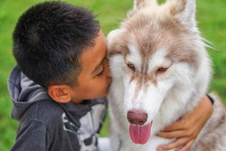 Happy asian young boy expression of love with hug and kiss his dog is siberian husky beautiful breed has two colored eyes and tongue hangs out ,child look lovely and caring pet and playing in park