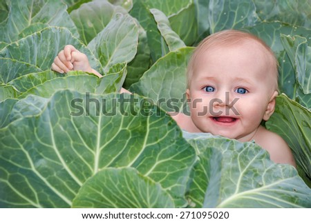 Happy beautiful baby in green cabbage leaves, the traditional story for children about where newborn babies come from.