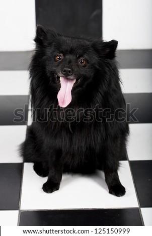 happy black dog with big smile