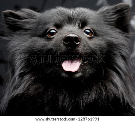happy black dog with big smile