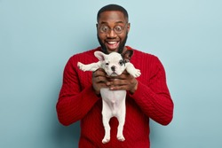 Happy black man with toothy smile, holds small black and white french bulldog puppy, glad to recieve it as present, dreamt about getting animal of such breed long time, isolated over blue background