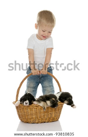 Happy boy with puppies in a basket.  isolated on white background
