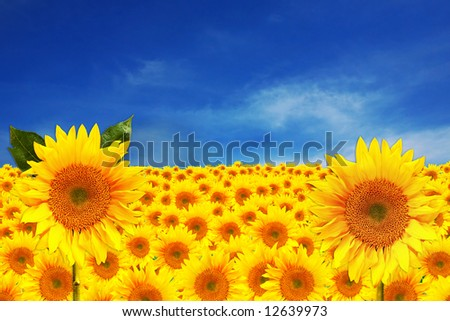 Happy Bright Sunflowers