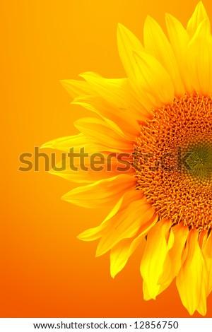 Happy Bright Yellow Sunflower