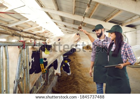Happy, caring young dairy farm workers looking after cows and using tablet computer with installed agro tech application to record cattle statistics. Food industry and smart farming