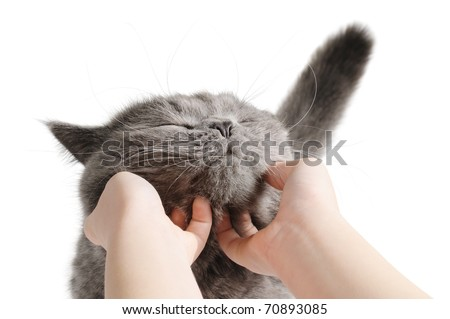 Happy cat is pleased with hand stroking. Isolated ion white