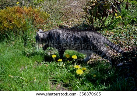 happy cat, kitten, cat, domestic pet, a cat in the garden, meadow, outdoors, indoors cat, domestic cat, lovely, lovely cat