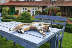 Happy cat lying on table in garden and enjoy life