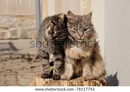http://image.shutterstock.com/display_pic_with_logo/63621/63621,1306582046,1/stock-photo-happy-cats-78117742.jpg