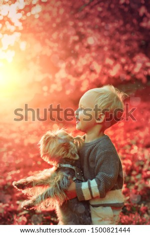Happy childhood. Sweet childhood memories. Child play with yorkshire terrier dog. Toddler boy enjoy autumn with dog friend. Small baby toddler on sunny autumn day walk with dog. Warmth and coziness. #1500821444