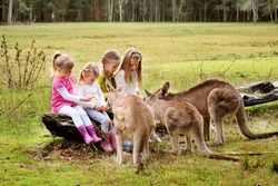 Happy children feeding kangaroo at zoo
