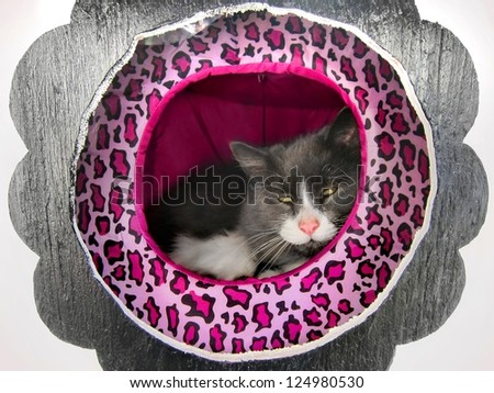 Happy / content fluffy Norwegian cat resting / lounging in a cat house / hotel