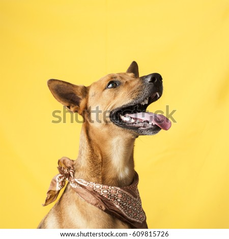 Happy, curious dog Mixed breed, isolated on a colorful background - Shutterstock ID 609815726