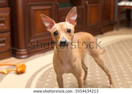 happy cute dog  #1054634213