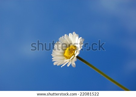 happy daisy flower under blue spring sky - stock photo