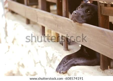 Happy dog. #608574191