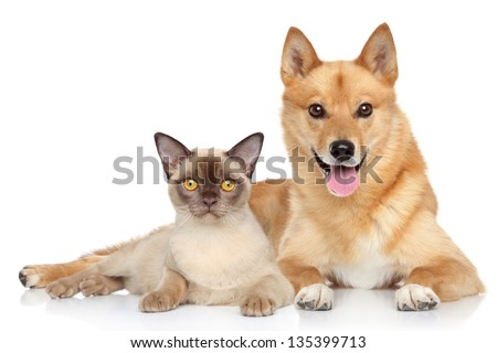 Happy dog and cat together on a white background