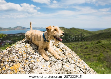 Happy dog breed lakeland terrier on a large rock on a background of mountains, sea and blue sky #287333915