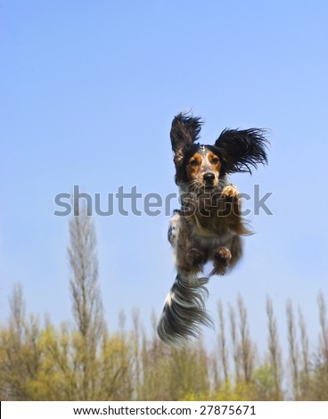 Happy dog caught in flight