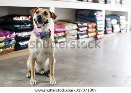 Happy dog in pet store