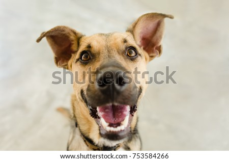 Happy dog is a happy dog smiling looking funny and excited with his mouth open looking right at you. #753584266