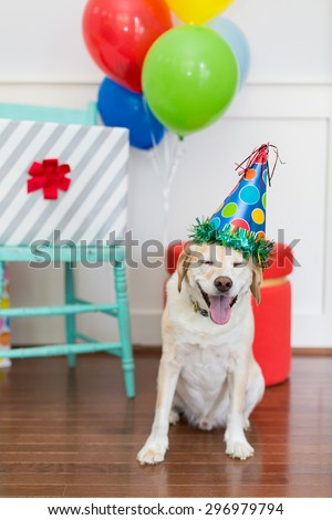 Happy Dog is excited to celebrate his birthday party