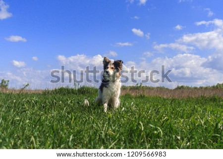 Happy dog is sitting in the grass #1209566983