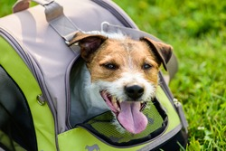 Happy dog looking out of mesh window of traveler pet carrier bag