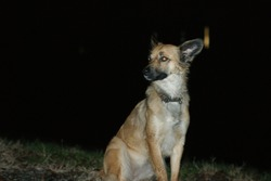 Happy dog on a night background. Eyes reflect the light from the camera. Her name is Matilda