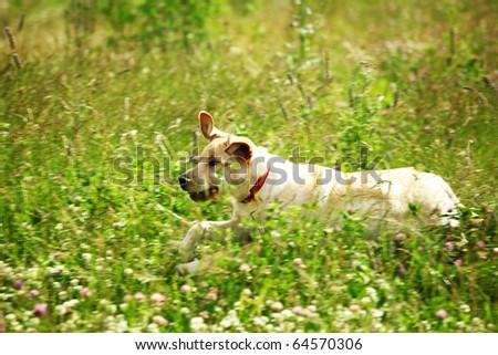 happy dog play in green grass